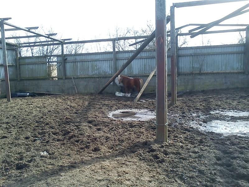 en grim hest