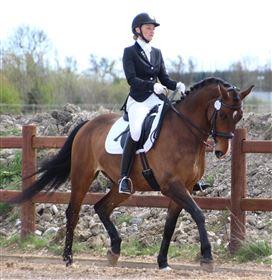 Tilridning/træning af din hest