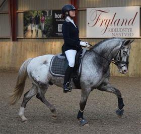Fantastisk pony udlånes