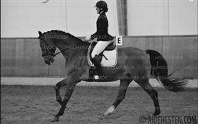 Rytter søger hest