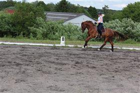 Ridning tilbydes - dygtig hest søges