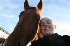 Stævne hest søges