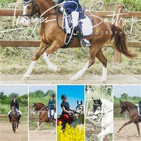 Heste fotografering