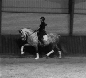 Stutteri Erica søger heste til videreuddannelse