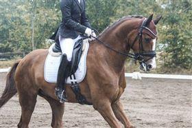 Kommission og uddannelse af ponyer/heste tilbydes
