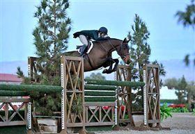 Spring betonet heste søges