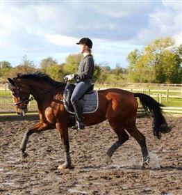 Ridning/videreuddannelse af hest/pony tilbydes - gratis