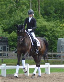 Tilridning/træning af din hest/pony tilbydes