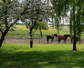 Heste ejendom