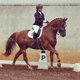 Mangler du en til at videre uddanne din hest ?