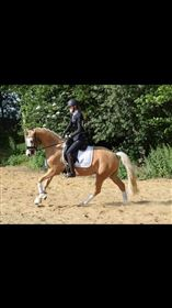 Heste i ridning/Dressur