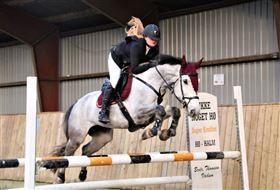 Ridning og Kommission hos NO1 Horses