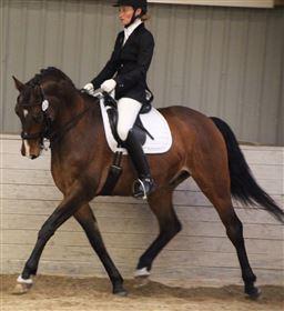 OPSTARTSTILBUD! Få din hest i træning hos Team Fine Dressage