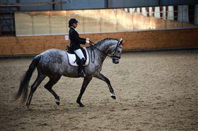 Problemer med at læsse din hest?