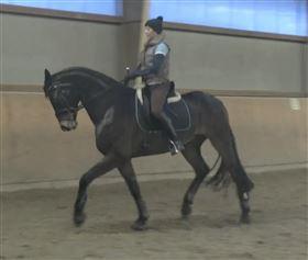 hest m. potentiale søges til gratis videruddannelse