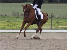 Hest søger part 4690