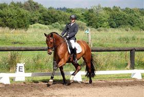 Hest søges til opstart af berideruddannelse!