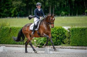 Leder du efter en hest at lære af?
