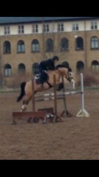 udlån af hest