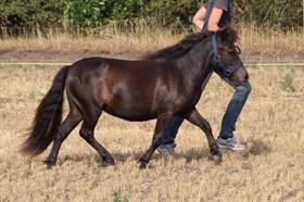 HORSEMOSENS RIGA