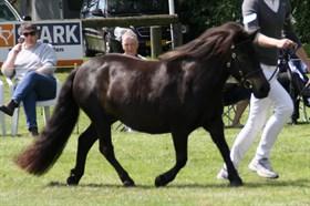 HORSEMOSENS TOFFIFEE