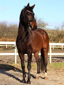 BC-HORSE.DK