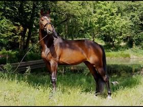 PINK HORSE MERCEDES