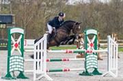 Hest til salg - Blåbærgårdens Q-urt