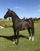 Horse for sale - Awesome horsebo