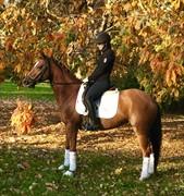 Horse for sale - FANTASY