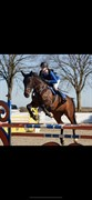 Horse for sale - OUNBØL FLORINA