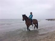Hest til salg - Lisas Lad