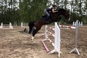 Horse for sale - Castro