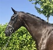 Horse for sale - SWEETNES