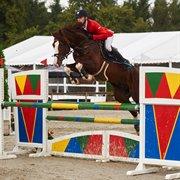 Horse for sale - LILLEVANGS TREASURE