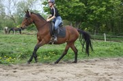 Hest til salg - ASILAH MADE
