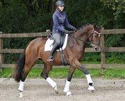 Horse for sale - LEISMANNS SURVIVOR