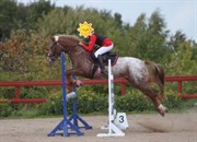 Horse for sale - LILLEPIGEN