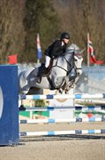 Horse for sale - Tinnerath Lad