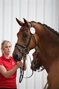 Hest til salg - ROSETTA