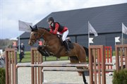 Horse for sale - NINET