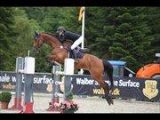 Horse for sale - VOLSTRUPS CHRISTOBAL