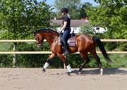 Horse for sale - KILDEBOS DOMINIK