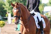 Horse for sale - Rock It 5