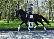 Horse for sale - SIROCCO