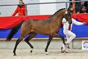 Horse for sale - ZARIF FORTUNA
