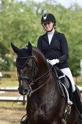 Horse for sale - HEMMINGWAY