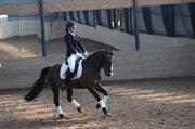 Horse for sale - Søndermarkens Kasper