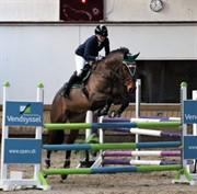 Horse for sale - KRONBORGDIGES FLIKA