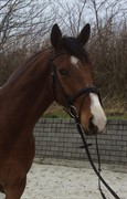 Horse for sale - DUSTY